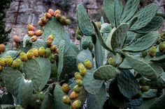 Prickly pear, anyone? I found this beauty in Stilo, Calabria.