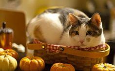 Kitty in a basket - adorable, animals, cuteness, cats Pumpkin Wallpaper, Cat Wallpaper, Animal Wallpaper, Orange Kittens, Cats And Kittens, Funny Kittens, American Wirehair, Adventure Cat, Beautiful Cats