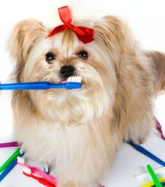 The Importance of Brushing Your Pet's Teeth on a Regular Basis