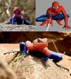 When Spiderpig doesn't cut it . . . angry toads ?