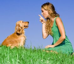 The Top 7 Dog Training Mistakes  -- Dog training doesn't have to be a nightmare.