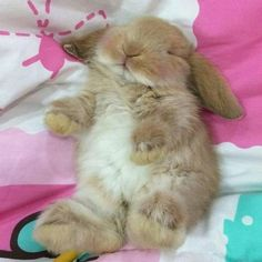 Image result for instagram photos of rabbits