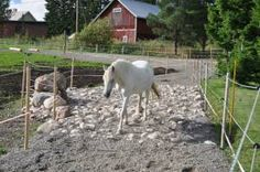Different Kind Of Turnout; Paddock Paradise Multiple surfaces keep the hoof healthy.Multiple surfaces keep the hoof healthy. Paddock Trail, Horse Paddock, Horse Stables, Horse Farms, Horse Arena, Dream Stables, Dream Barn, Dressage, Horse Ranch