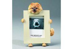 Picture Frame Pomeranian