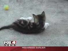 Amazing Grace: The Two-Legged kitten