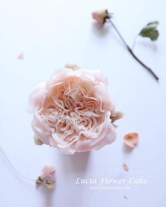 Lucia Butter Cream Flower Cake & Class www.luciancake.com Looks real ? Lucia's style _realistic buttercream Garden rose You can learn this in realistic buttercream flower piping class ! See you soon ! @lucia_0215 #instafood#instasg#indonesiacake#indonesiafood#cake#cakes#buttercream#buttercreamfrosting#cake#cakedesigner#flowercake#koreanbuttercream#flowercakeclass#luciacake#cakevideo#bakingclass#cakestagram#baking##buttercreamclass#buttercreamflowers#buttercreamflowercake#bakingclassj...