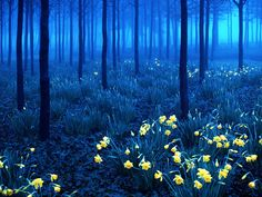 Шварцвальд (Черный лес), Германия | Проект Байхоу