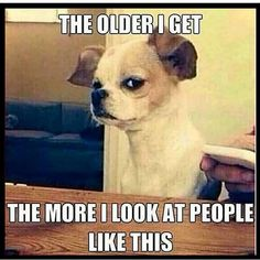 # animals # animal memes # funny memes # memes # cellphone,Funny, Funny Categories Fuunyy Don& We All? # animals # animal memes # funny memes # memes # cellphone Source by knowyourmeme. Funny Animal Memes, Dog Memes, Funny Animal Pictures, Cute Funny Animals, Funny Cute, Funny Dogs, Hilarious Pictures, Funny Pet Quotes, Funny Memes For Kids