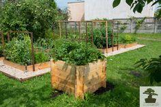 Mini ogrody