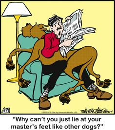 Today on Marmaduke - Comics by Brad Anderson Cartoon Dog, Cartoon Pics, Funny Dogs, Funny Animals, Harlequin Great Danes, Dog Comics, Great Dane Dogs, Yorkshire Terrier Puppies, Animal Quotes