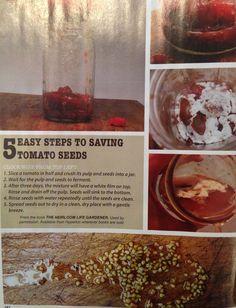 Saving tomato seeds on pinterest tomato seeds heirloom tomato seeds