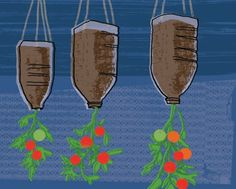 Make: an upcycled hanging tomato planter Repurpose a plastic bottle and have tomatoes hanging around Growing Tomatoes Indoors, Growing Tomatoes From Seed, Growing Tomato Plants, Tomato Seedlings, Growing Tomatoes In Containers, Growing Vegetables, Growing Grapes, Grow Tomatoes, Cherry Tomato Plant