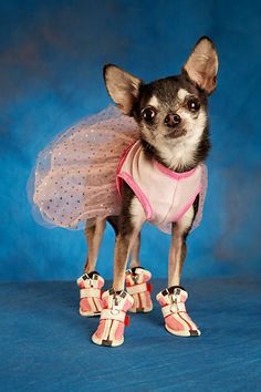 I bought some little booties like this for Roxy (they were on sale and I wanted to try it out). Have yet to succeed in actually putting them on her, fiesty little booger. =)