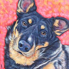 Remy the Australian Cattle Dog (Blue Heeler)  Pet Portrait by Bethany.