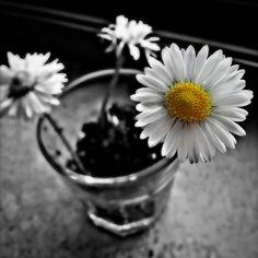 Fiori by Maria Josè Cinti. #flowers #fiori