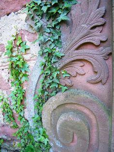 Houseplants That Filter the Air We Breathe Seligenstadt, Germany Ivy Plants, Indoor Plants, Plant Bugs, Natural Bug Spray, Desert Plants, Plant Nursery, Little Plants, Poinsettia, Houseplants