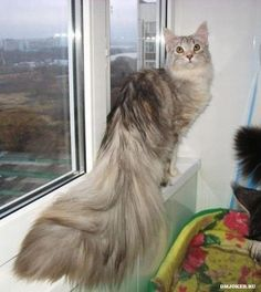 what a tail!!!