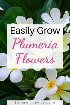 Tropical Landscaping, Tropical Garden, Tropical Plants, Backyard Landscaping, Plumeria Care, Plumeria Flowers, Tropical Flowers, Common Garden Plants, Garden Types