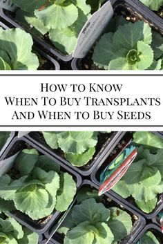 Do you ever wonder if you should buy a transplant, or start, from your local…