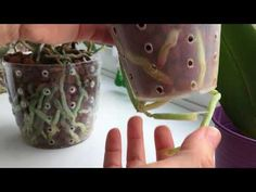 Orchids, Planter Pots, Flowers, Plants, Youtube, Jewelry, Gardening, Decoration, Tips
