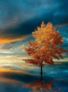 the lone tree Beautiful World, Beautiful Images, Beautiful Sky, Mother Earth, Mother Nature, Nature Landscape, Lone Tree, Photo D Art, Autumn Trees
