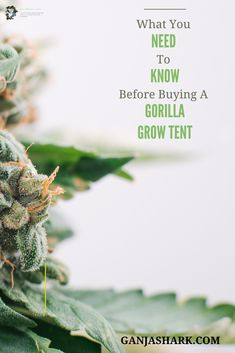 Cannabis Grow Ideas: Is the Vivosun worth buying? Check this article out to find out. Indoor Hydroponic Gardening, Hydroponics, Gardening For Beginners, Gardening Tips, Growing Weed Indoors, Best Led Grow Lights, Tent Reviews, Grow Boxes, Grow Tent