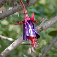 Fuchsia Hummingbird Feeder - Desert Steel Co. Tin Can Flowers, Home Flowers, Metal Flowers, Garden Bird Feeders, Hanging Bird Feeders, Hummingbird Feeder Recipe, Tree Branch Art, Tree Art, Butterfly Feeder