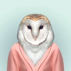 Barn Owl by Yago Partal.