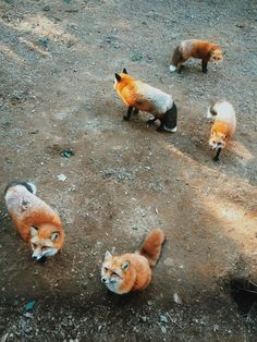 This adorable village of fluffy vulpines is home to 6 different species of fox.