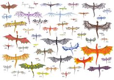 temeraire dragon breeds;