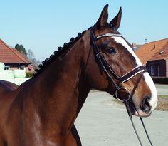 rundgenähte Trense von Harry Horse in Sport, Reit- & Fahrsport, Trensen & Zubehör | eBay