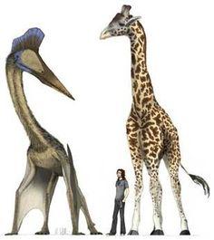 Pterosaur to Giraffe comparison