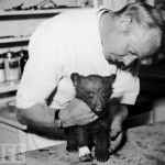 A 1950 forest fire in the Capitan Mountains in N. Mexico orphaned a cub. The bear sustained burns to his legs and paws. Pictured: Veterinarian Edwin J. Smith examines the paws of the future Smokey Bear after his rescue. The Real Smokey Bear Smokey The Bears, Land Of Enchantment, Bear Cubs, Interesting History, Back In The Day, Animal Kingdom, American History, Wildlife, Creatures