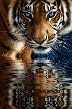 Тигр - анимация на телефон №1399849