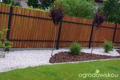 Ogród Anety - strona 12 - Forum ogrodnicze - Ogrodowisko