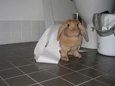 The moment when bunny realizes she's been caught in the act - September 13, 2013