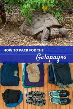 Deciding what to pack for a trip to the Galapagos Islands and mainland Ecuador can be challenging. Here are our tips on packing for this trip of a lifetime | What to Pack for Ecuador and the Galapagos
