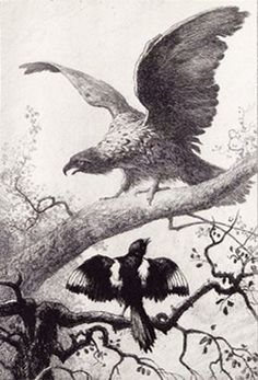 A 19th sketch illustrating the 17th century La Fontaine Fables: The Eagle and the Magpie; from 1883 engraving by Auguste Delierre. Jean de La Fontaine was the most famous French fabulist and one of the most widely read French poets of the 17th century and known above all for his Fables.