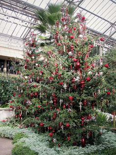 A Longwood Christmas at Longwood Gardens