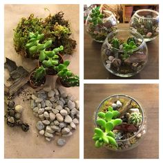 Tree Branches, Terrarium, Art Pieces, How To Make, Home Decor, Mom, Board, Terrariums, Decoration Home