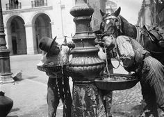 | Bebedouro - Lisboa (1912) Fotografia de: Joshua Benoliel Arquivo Municipal de Lisboa
