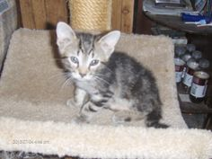 One of the kittens. About 6 weeks old