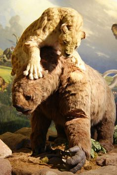 Smilodon attacking a giant ground sloth