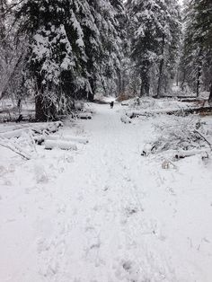 Snow Trails in Page Meadows