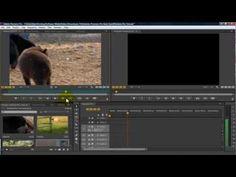 Adobe Premiere Pro CS6 for Beginners.    ...starring cute baby bears.