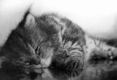 50 profesionales de Fotos Dibujos de animales realistas