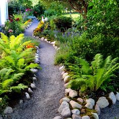23 Fern Landscaping Ideas To Try In 2020 -A Nest With A Yard - ferns and other plants on both side of the a walkway - Cheap Landscaping Ideas, Shade Landscaping, Landscaping With Rocks, Garden Landscaping, Diy Garden, Shade Garden, Garden Paths, Walkway Garden, Gravel Pathway