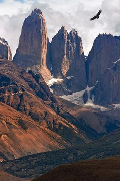 Condor grounds. Towers of Paine and condor. Torres del Paine National Park, Patagonia, Chile. - Gallery-1 - Mike Reyfman Photography