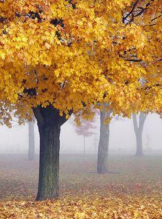 misty Maples