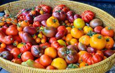 Tomato Garden, Garden Tomatoes, Zucchini Salsa, Fresh Tomato Salsa, Salsa Recipe, Pints, Vegetables, Sweet, Recipes